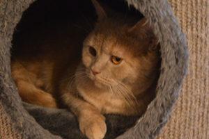 Kitty van Cattery Mitoe